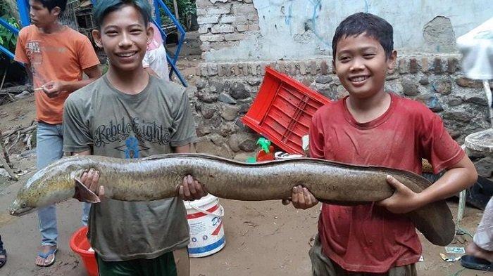 Banjir Bandang Terjang Lebak Banten, Warga Berburu Ribuan Ikan 'Mabuk' di Sungai Ciujung