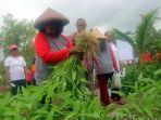 anggota-sekolah-mama-berkebun-memanen-semangka.jpg
