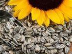 biji-bunga-matahari.jpg