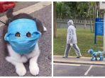 hewan-peliharaan-tertangkap-kamera-mengenakan-masker-demi-hindari-virus-corona.jpg