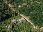 hutan-adat-papua-jadi-lahan-sawit.jpg