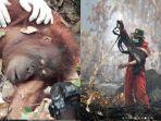 orangutan-terselamatkan-dan-foto-pemadam-karhutla-yang-dilirik-jokowi.jpg