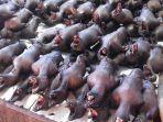 pasar-kuliner-ekstrim-tomohon-di-sulawesi-utara.jpg