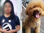 prt-indonesia-lempar-anjing-di-singapura.jpg