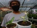 tanaman-hias-jenis-adansoni-variegata-kenzo.jpg