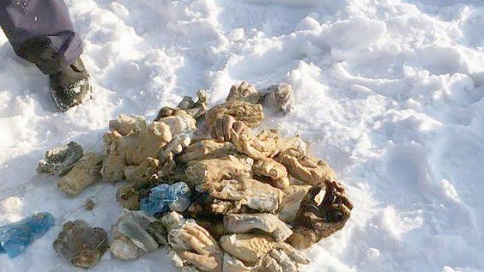 54 Potongan Tangan Ditemukan Dalam Tas di Siberia Dekat Perbatasan China, dari Mana Asalnya?