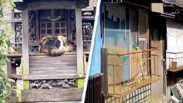 Viral Video TikTok Tunjukkan Uniknya Jepang, Ada Kereta Tanpa Masinis hingga Sewa Apartemen Berhantu