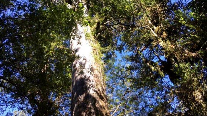 Suhu Bumi Tercatat Makin Panas, Google Buat Aplikasi Pemetaan Pohon untuk Bantu Sejukkan Kota