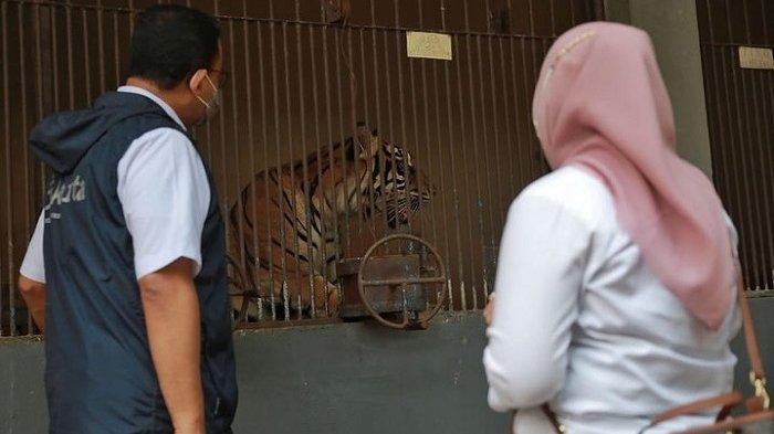 Gubernir DKI Jakarta Anies Baswedan mengapresiasi kinerja tim doketer Taman Margasatwa Ragunan (TMR) dalam menangani dua harimau yang terpapar Covid-19.