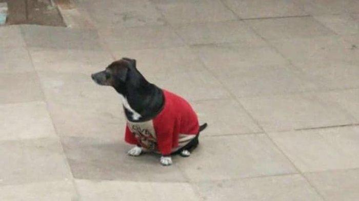 Lindungi Majikannya yang Sakit, Anjing Ini Rela Lompat ke Mobil Ambulans dan Menunggu di Rumah Sakit