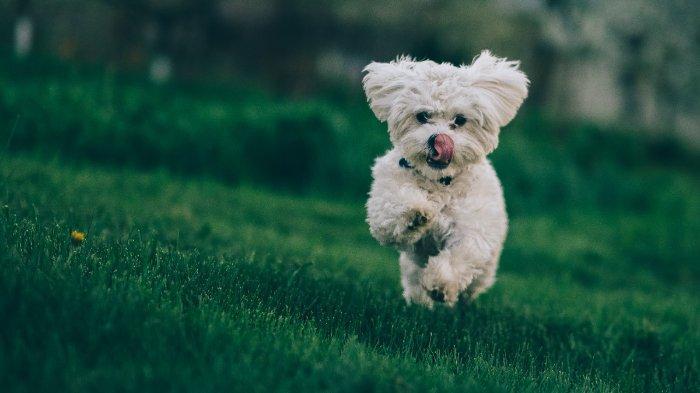 Ilustrasi anjing yang sedang bermain