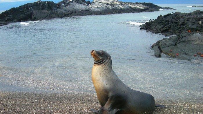 Turis di Pantai Dihujat Gara-gara Foto Terlalu Dekat dengan Anjing Laut