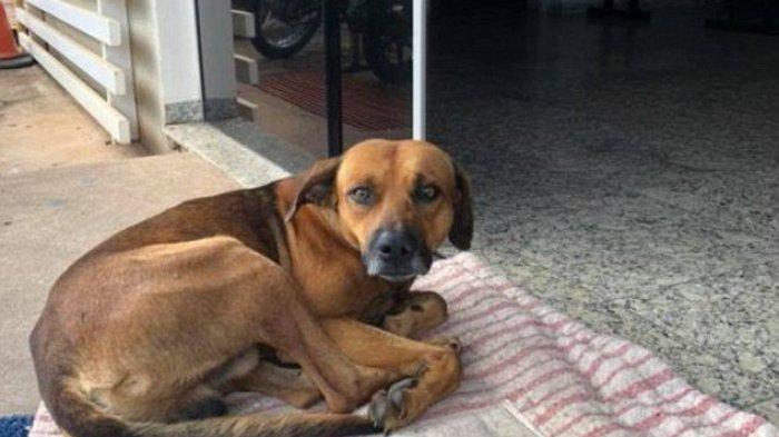 Tuannya Meninggal 4 Bulan Lalu, Anjing Setia Ini Masih Duduk Menunggu di Luar Rumah Sakit