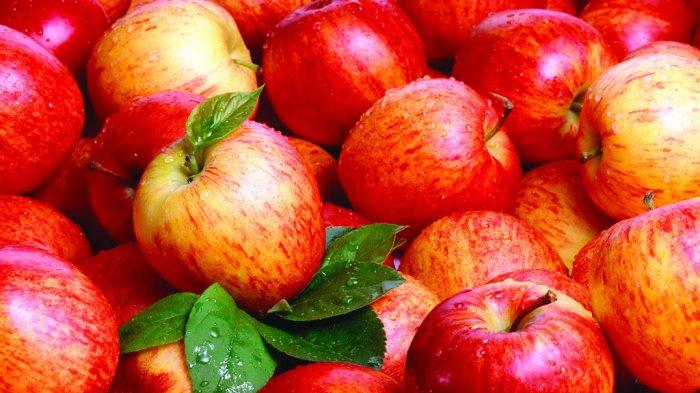 Ilustrasi buah Apel
