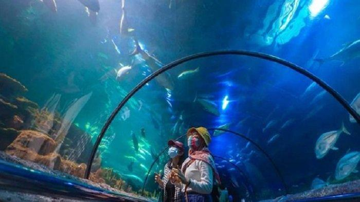 Aquarium Seaworld Ancol