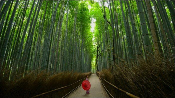 Jangan Nekat Foto Sembarangan di Kyoto, Bisa Didenda Rp 1,3 Juta