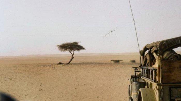 Bertahan Ratusan Tahun Terisolasi di Gurun Sahara,  Tenere Tumbang Ditabrak Truk