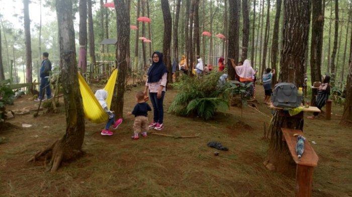 Alternatif Destinasi Wisata di Tegal, Bale Gandrung yang Dihiasi Rimbunnya Pohon Pinus