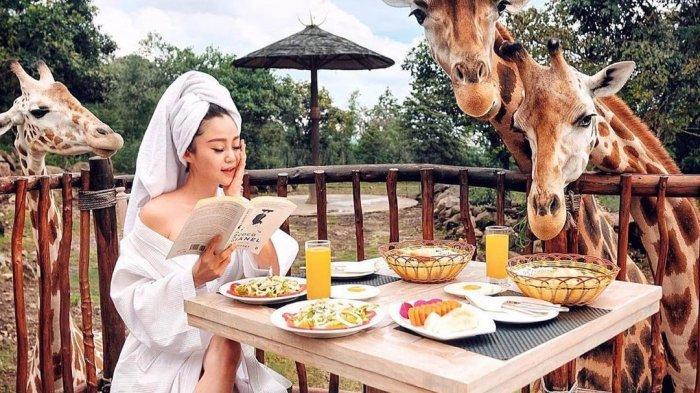Liburan ke Taman Safari Prigen, Jangan Lewatkan Keseruan Feeding Giraffe di Baobab Safari Resort