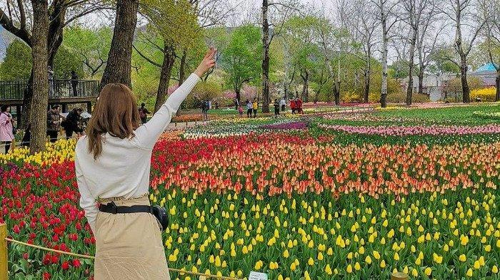 Pameran Seni Yoyai Kusuma Cosmic Nature Akan Diadakan di New York Botanical Garden, Seperti apa?