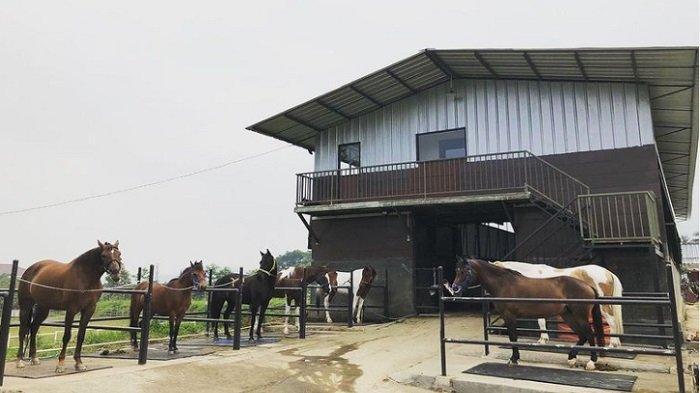 Tak Hanya Berkuda, Berikut Ragam Aktivitas Wisata Seru di The Ranch Cisarua Terbaru 2021