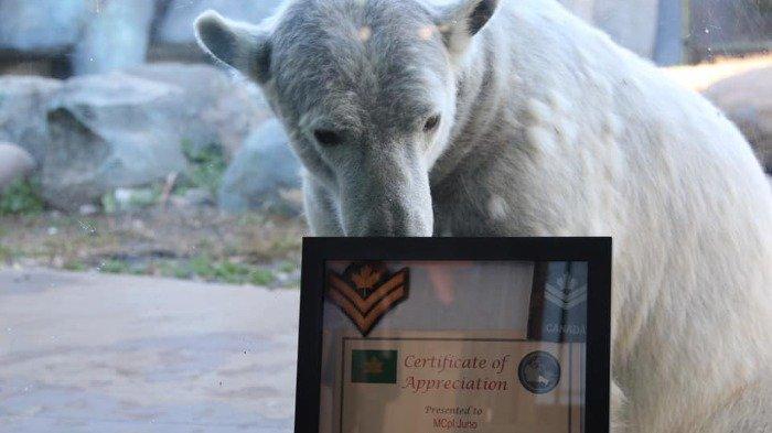 Beruang Kutub Ini Dipromosikan Jadi Kopral Master Kehormatan oleh Angkatan Darat Kanada