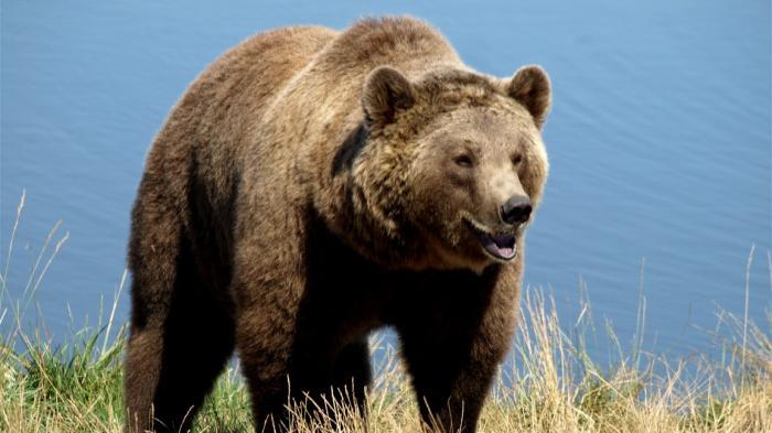 Seorang Pria Dikenai Denda hingga Rp 107 Juta Akibat Bergulat dengan Beruang di Kebun Binatang