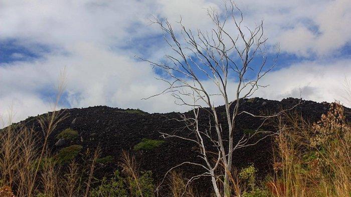 Fakta Unik Black Mountain, Gunung di Australia dengan Fenomena Anehnya