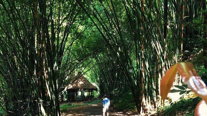 5 Tempat Wisata Instagramable di Malang, Ada Boon Pring Andeman Mirip Hutan Bambu Arashiyama Jepang