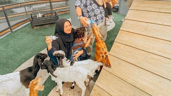 TRAVEL UPDATE: Uniknya Boxzoo, Kebun Binatang yang Berlokasi di dalam Kawasan Mal Bogor