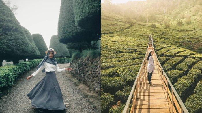 Bukit Jamur Rancabolang Ciwidey, Wisata Alam di Bandung yang Dikelilingi Kebun Teh Instagramable