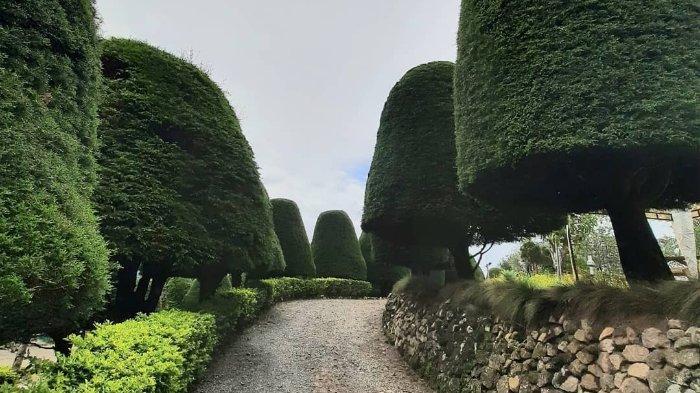 Harga Tiket Masuk Bukit Jamur Rancabolang Ciwidey, Wisata Alam Instagramable untuk Libur Akhir Tahun