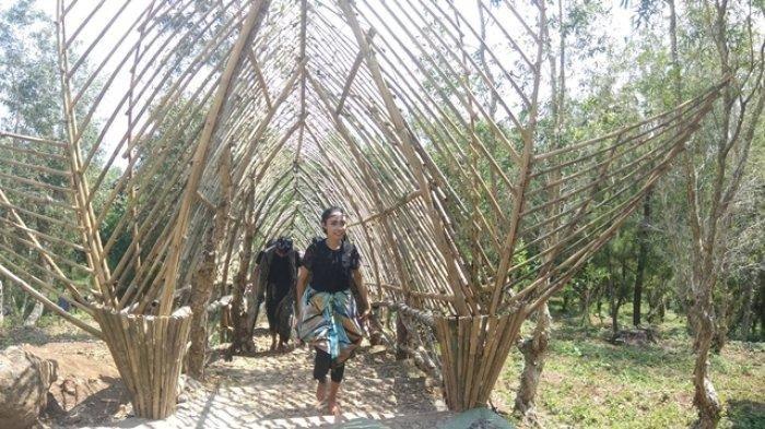 Kunjungi Bukit Lintang Sewu, Saksikan Panorama Bantul dari Ketinggian