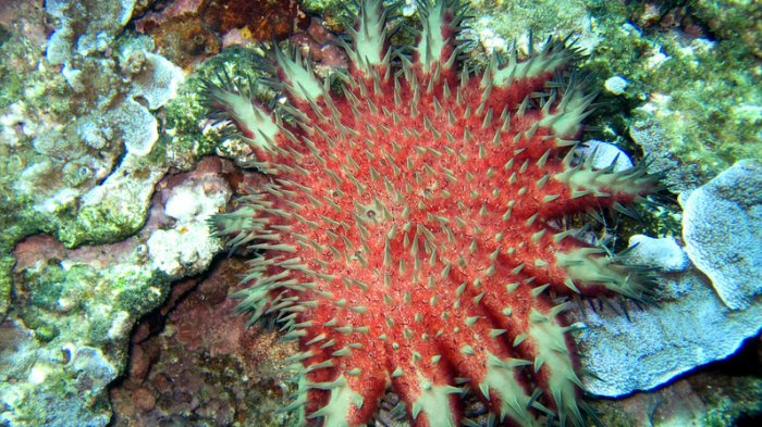 Jangan Sampai Disentuh! 6 Biota Laut yang Berbahaya Bagi Manusia