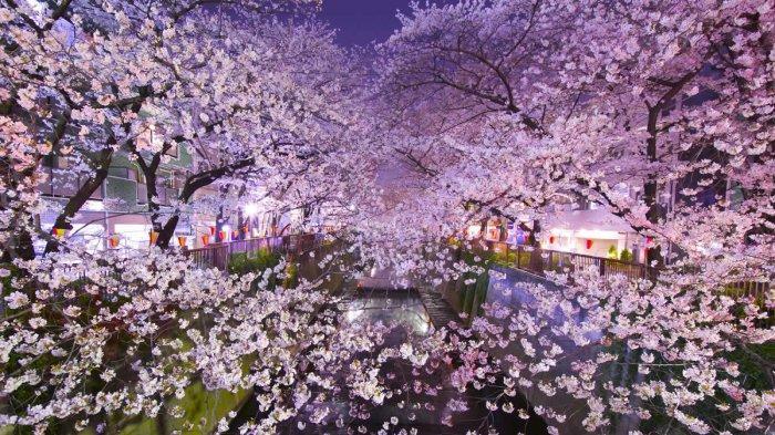 Cara Mudah dan Cepat Buat Visa Jepang untuk Pemegang Paspor Biasa 2019