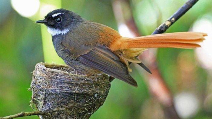 Jadi Pertanyaan yang Bikin Penasaran: Apakah Burung Bisa Terbang Saat Hujan Deras?