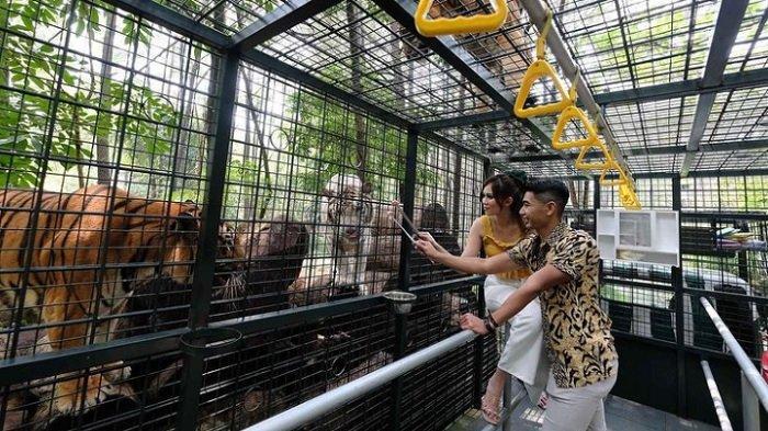 Harga Tiket Masuk Taman Safari Prigen 2021, Coba Serunya Interaksi Lebih Dekat dengan Satwa
