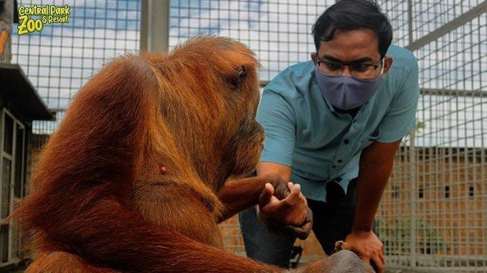 Harga Tiket Masuk Central Park Zoo, Tempat Rekreasi Keluarga di Deli Serdang dengan Beragam Satwa