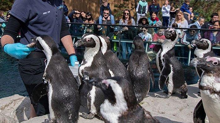 Harga Tiket Masuk Central Park Zoo Medan, Punya Koleksi Ikan Hiu Sirip Hitam