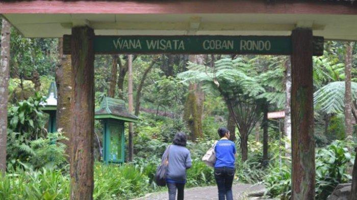 Rekomendasi Tempat Piknik di Malang, Ada Lembah Indah Malang yang Punya Tempat Glamping