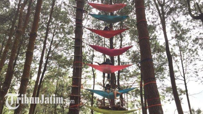 Salah satu wahana hammock di Hutan Alas Pinus, Coban Talun. Lokasi ini banyak diminati oleh wisatawan karena wisatawan bisa mendapatkan edukasi.