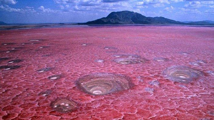 Mengenal Danau Natron di Tanzania, Punya Pemandangan Cantik Namun Mematikan  - Tribun Travel