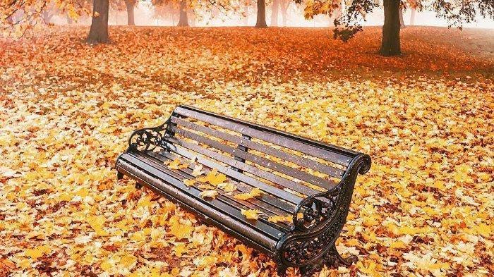Dedaunan yang berubah warna di Hyde Park, London