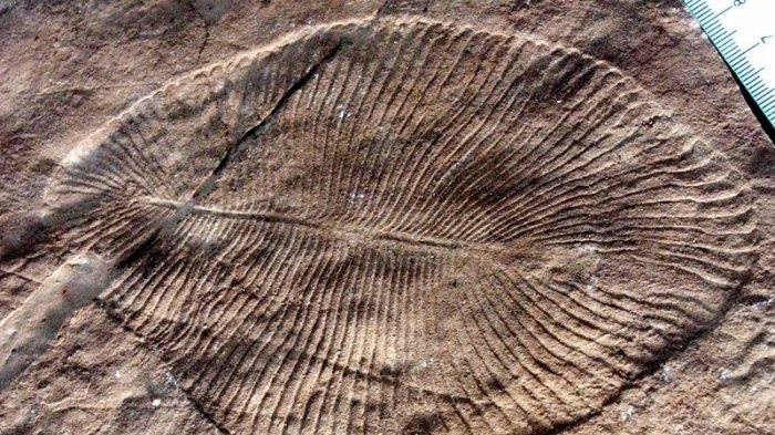 2 Temuan Fosil Paling Aneh di Dunia, Termasuk Serpihan Ketombe Berusia Jutaan Tahun