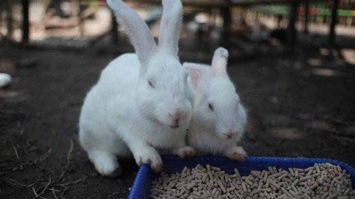 Dua Kelinci di Taman Balekambang Solo
