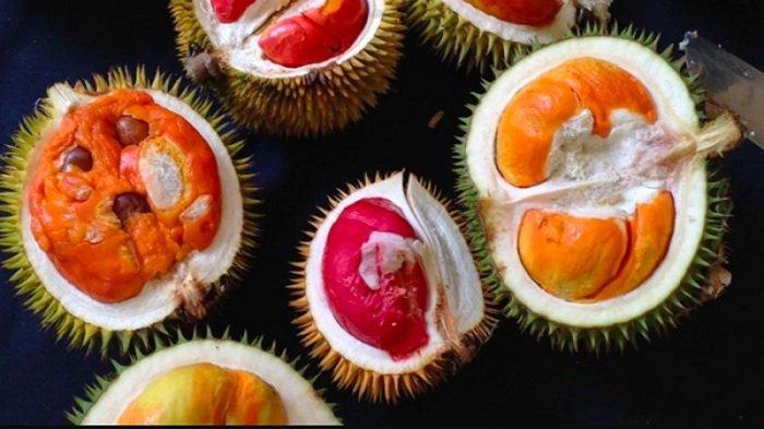 Kolektor Durian Asal Malaysia Ini Punya 80 Jenis Pohon Durian yang Ditanam di Kebunnya