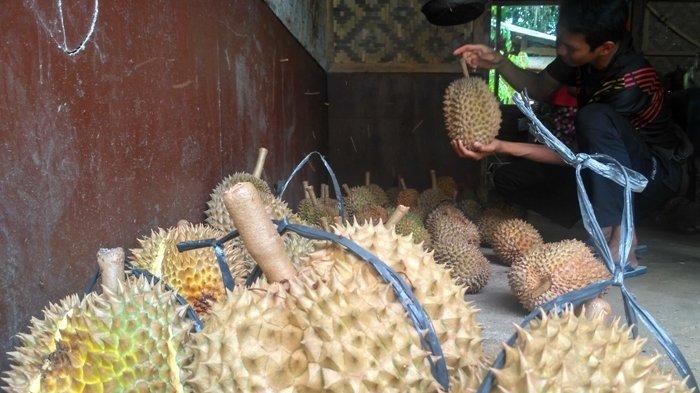 Pembeli memilih buah durian Banyumas di Kemranjen, Banyumas, Jawa Tengah.