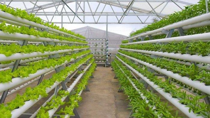Jajal Serunya Edukasi Agrikultur di Edufarm Lembah Indah Indah Malang, Berikut Info HTM Terbarunya