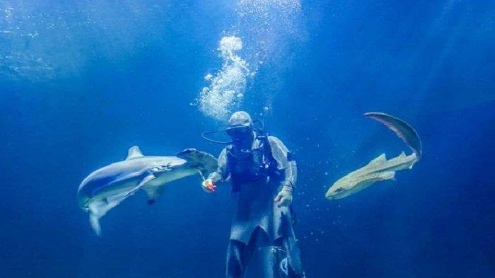 Harga Tiket Masuk Seaworld Ancol 2021, Banyak Wahana Edukatif untuk Mengenal Beragam Biota Laut
