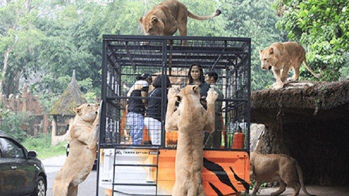 Harga Tiket Masuk Taman Safari Bogor, Lengkap dengan Akses Menuju Lokasi